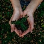 sostenibilidad-marcas-2